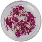 Flori uscate – roz și albe